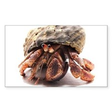 Hermit Crab Posing Rectangle Sticker 50 pk)
