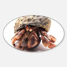 Hermit Crab Posing Oval Decal