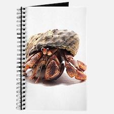 Hermit Crab Posing Journal