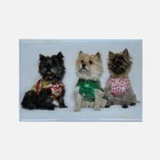 Cairn Terriers in the Rain Rectangle Magnet