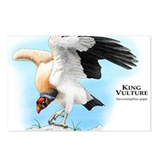 King Vulture Postcards (Package of 8)