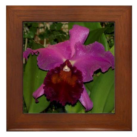 Deep Purple Orchid Framed Tile