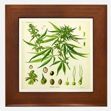 Cannabis Sativa  Framed Tile