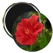 Blooming Hibiscus Magnet
