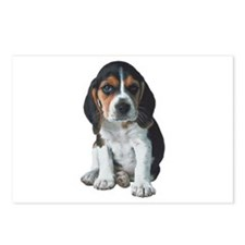 Beagle Postcards (Package of 8)