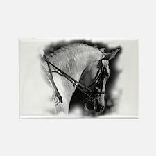 Dressage horse Rectangle Magnet