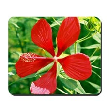 Star of Texas Hibiscus - Art/Photography Mousepad