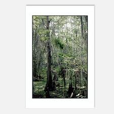 Swamp Serenity Postcards (Package of 8)