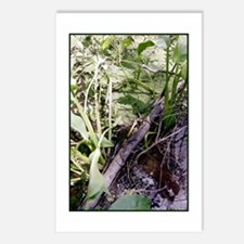 Snake Sunbath Postcards (Package of 8)
