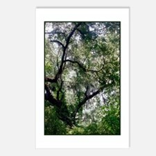 Moss Canopy Postcards (Package of 8)