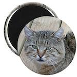 Light Tabby Cat Magnet
