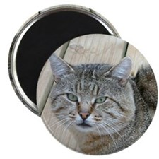 Light Tabby Cat Magnet