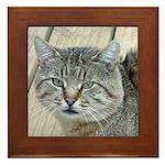 Light Tabby Cat Framed Tile