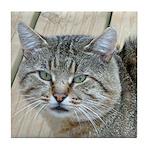 Light Tabby Cat Tile Coaster