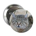 Light Tabby Cat 2.25