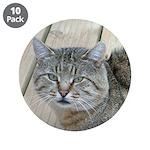 Light Tabby Cat 3.5