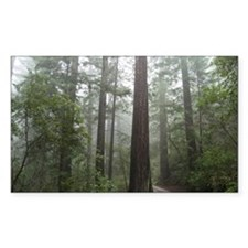 Redwood Forest Fog Rectangle Decal