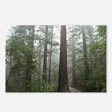 Redwood Forest Fog Postcards (Package of 8)