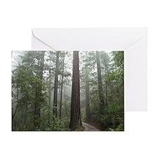 Redwood Forest Fog Greeting Card