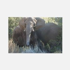 Cool Elephant pictures Rectangle Magnet