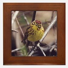 Palm Warbler Framed Tile