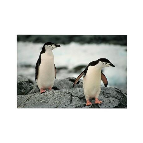 Chinstrap Penguin Rectangle Magnet