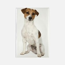 Jack Russell Terrier Rectangle Magnet