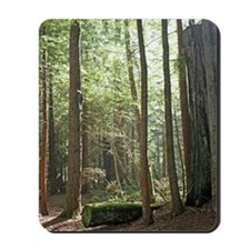 Early Morning in the Redwoods Mousepad