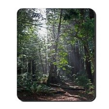 Sunlight through the Redwoods Mousepad