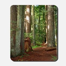 A view in the redwoods I Mousepad
