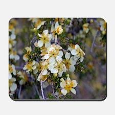 Desert Blooms Mousepad