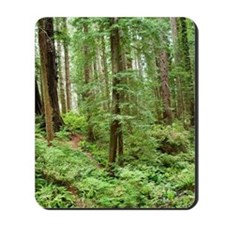 Hiking through the Redwoods Mousepad