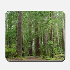 Amoungest the Redwood Grove Mousepad