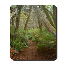 Hiking through the Forest Mousepad