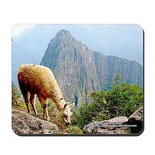 Lama Grazing at Machupicchu - Mouse Pad