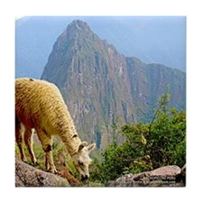 Machupicchu with Cute Lama - Tile Coaster
