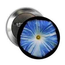 "morning glory 2.25"" Button (10 pack)"