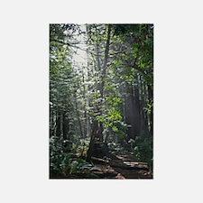 Sunlight through the Redwoods Magnet