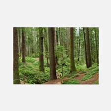 Glimpse into the Redwood Forest Magnet