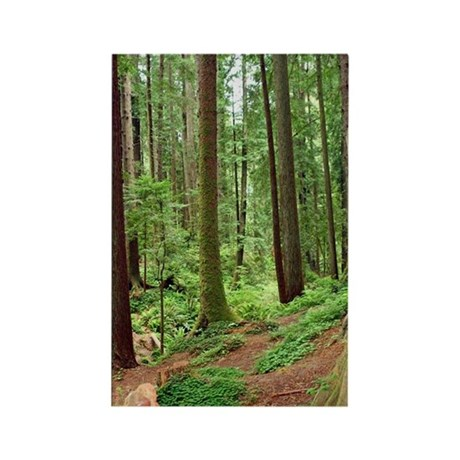 A view in the redwoods Magnet (10 pack)