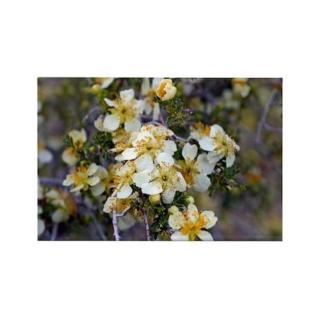 Desert Blooms Rectangle Magnet (100 pack)