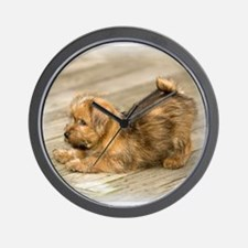 Playful Norfolk Terrier Pup Wall Clock