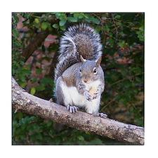 Squirrel Treat Tile Coaster
