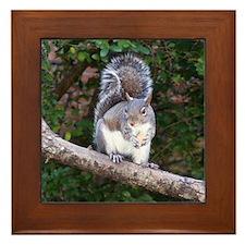 Squirrel Treat Framed Tile