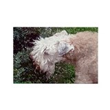 Soft coated wheaten terrier Magnets