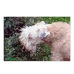 Wheaten Terrier Postcards (Package of 8)