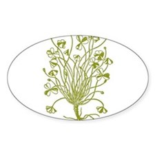 Vintage Shamrock Illustration Oval Decal