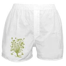 Vintage Shamrock Illustration Boxer Shorts