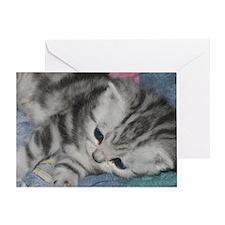 Tabby Kitten - Greeting Card