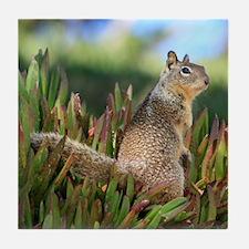 Ground Squirrel Tile Coaster